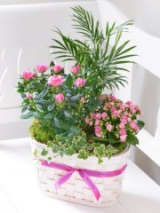 Happy Birthday Mixed Planted Basket