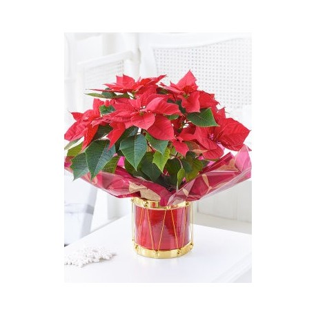 Poinsettia Gift Bag with Chocolates and Red Wine