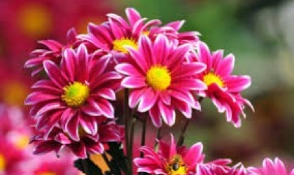 Why Should You Buy Flowers From Florists Inverurie